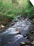 Tennessee, Great Smoky Mountains National Park, a Mountain Stream Prints by Christopher Talbot Frank
