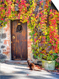 Italy, Tuscany, Contignano. a Wooden Door Surrounded by Fall and Cat Plakater af Julie Eggers