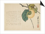 Persimmon, C.1854-59 Prints by  Shunsei