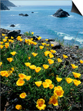 California, Big Sur Coast, Central Coast, California Poppy Posters by Christopher Talbot Frank