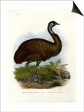 Emu, 1864 Affiches