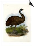 Emu, 1864 Prints