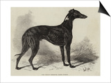 Lord Lurgan's Greyhound, Master M'Grath Prints by Samuel John Carter