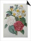 Bouqet of Camellias, Narcisses and Pansies Posters by Pierre-Joseph Redoute