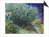 Lilac Bush, 1889 Prints by Vincent van Gogh