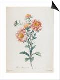 Reine-Marguerite, from Fleurs Dessinees D'Apres Nature, C. 1800 Kunst von Gerard Van Spaendonck