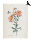 Reine-Marguerite, from Fleurs Dessinees D'Apres Nature, C. 1800 Prints by Gerard Van Spaendonck