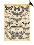 Illustration of Butterflies and Moths Posters