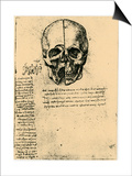 Anatomical Sketch of a Human Skull, C1472-1519 Posters by  Leonardo da Vinci