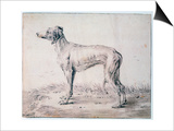 Greyhound, 1644 Posters by Cornelis Saftleven