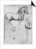 Studies of Horses, C1490 Posters by  Leonardo da Vinci