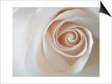 White Rose Swirl Prints by Karen Ussery