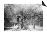 The 'Shambles' Oak, Sherwood Forest, 1904 Art