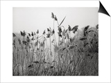 Prospect Park Lake With Grasses - Botanical Landscape Brooklyn Print by Henri Silberman