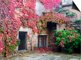 Italy, Tuscany, Volpaia. Red Ivy Covering the Walls of the Buildings Plakater af Julie Eggers