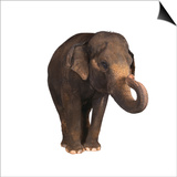 Indian Elephant Prints by  DLILLC