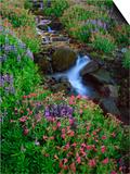 Elk Creek and Wildflowers Prints by Steve Terrill