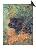 Pig, Wild Boar Indian Poster by Winifred Austen