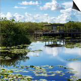 Everglades National Park - Unesco World Heritage Site - Florida - USA Posters by Philippe Hugonnard