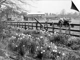Spring Farming Scene Posters