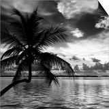 Silhouette of Palm Tree at Sunset Prints by Philippe Hugonnard