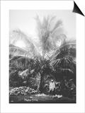 Making Copra, Solomon Islands, Fiji, 1905 Posters