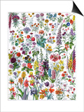 Annual and Biannual Flowers Prints