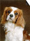 Cavalier King Charles Spaniel Dog Prints