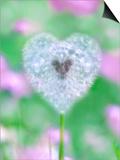 Dandelion Seed Head, UK Garden Prints