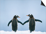 Gentoo Penguin Pair 'Holding Hands' Prints