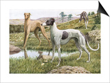Greyhounds in Country Posters by Louis Agassiz Fuertes