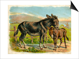 Donkey and Foal by a Fence Posters