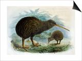 Brown Kiwi Posters