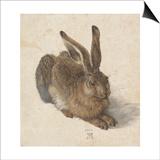 Hare, 1502 Posters by Albrecht Dürer
