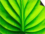 Green Design Affiches par  PhotoINC