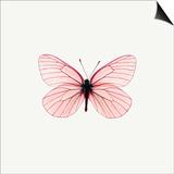 Papillon rose Affiches par  PhotoINC