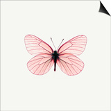 Pink Butterfly Prints by  PhotoINC