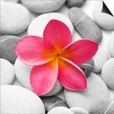 Zen Flower Poster