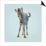 Zebra Prints by John Butler Art