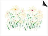 Marguerite Daisy Print by Summer Thornton