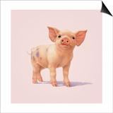 Pig Posters by John Butler Art