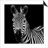 Zebra II Square Kunstdrucke von Debra Van Swearingen