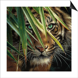Tiger Eyes Prints by Collin Bogle
