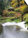Triberg Waterfall in Autumn, Black Forest, Baden-Wurttemberg, Germany Prints by Green Light Collection