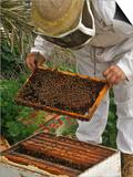 A Beekeeper Holds a Honeycomb at Al Taryyaq Farm in Jordan Valley Prints by Ali Jarekji
