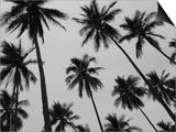 Colima Palms 2 Affiches par Ed Fladung