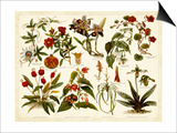 Tropical Botany Chart II Print by  Meyers