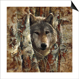 Wolf Spirit Print by Collin Bogle