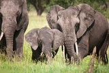 Elephant family in Tanzania Fotografisk tryk af Sandra Young
