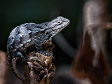 Reptile Lizard in North Carolina Photographic Print by Neva Kittrell-Scheve